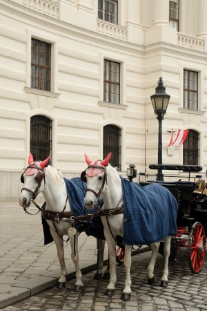 blinder: An image of a couple of horses in Vienna