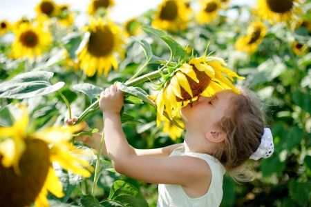 A little girl in the field smelling a sunflowers