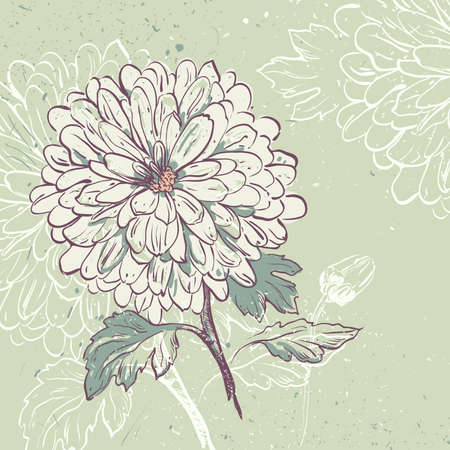 Blooming Chrysanthemum. Floral background  with space for your message Vector
