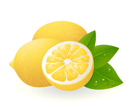 with lemon: Fresh lemons with leaves. Realistic illustration Illustration