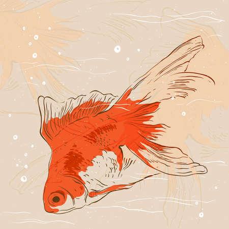 민물의: Goldfish.A background with space for messages