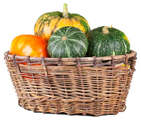 Harvested pumpkins in  basket. Isolated on white background photo
