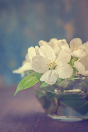 A bouquet of flowers of apple. Close up. photo