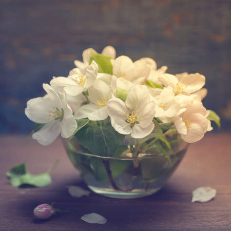 spring flowers still life photo