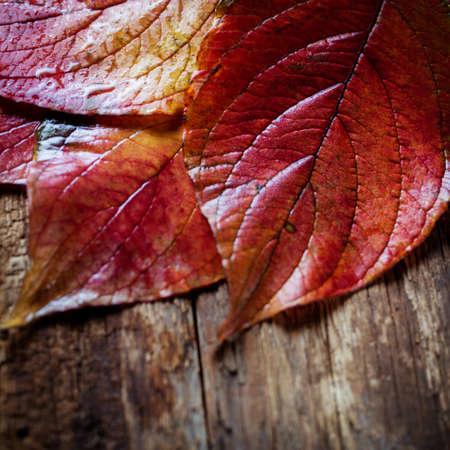 hojas de colores: hojas de colores de oto�o Foto de archivo