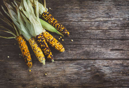 ready to cook food: Raw Organic Corn Ready to Cook. Food background concept with copyspace