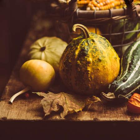 toned image: Small pumpkin closeup. Toned Image Stock Photo
