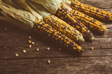 ready to cook food: Raw Organic Corn Ready to Cook. Food background concept. Toned Image