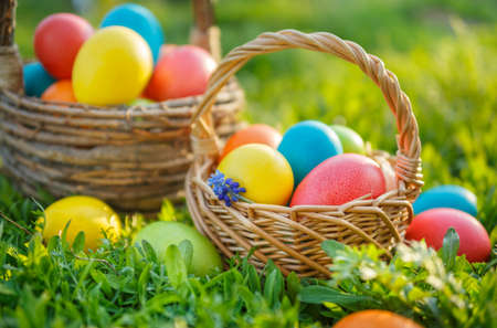 Colorful Easter eggs in baskets, on the spring the grass.