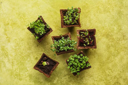 Different potted seedlings growing in biodegradable peat moss pots. Top view. Reklamní fotografie - 77489583