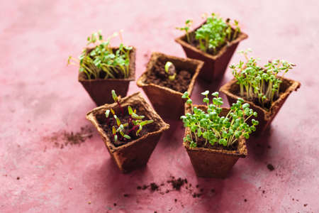 Different potted seedlings growing in biodegradable peat moss pots. Selective focus