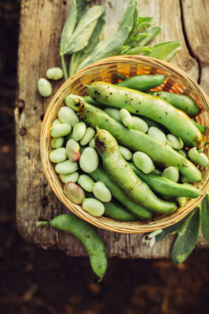 Fresh green broad beans in the open air. Healthy food. Top view. Stok Fotoğraf - 84998240