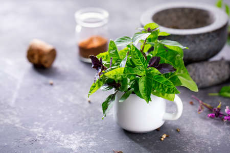 Green and purple Basil in a white mug, selective focus. Food background with copy space. Stock Photo