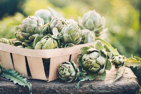 갓 수확 된 양인데 정원, 건강 한 식단에 대 한 야채입니다. 스톡 콘텐츠