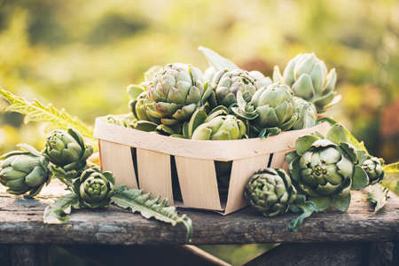 Artichokes in the box against the green of the garden. Vegetables for a healthy diet. Imagens