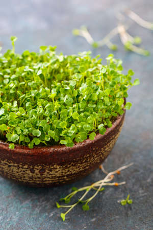 Fresh sprouts of Arugula, micro greens. Healthy food and diet concept. Stock Photo