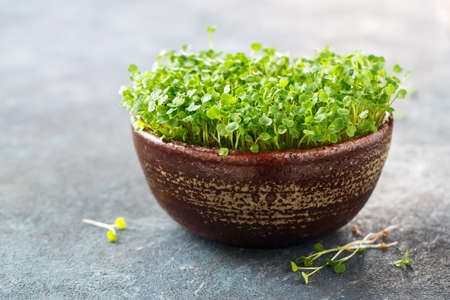 Arugula sprouts in a bowl, micro green sprouts for healthy vegan food