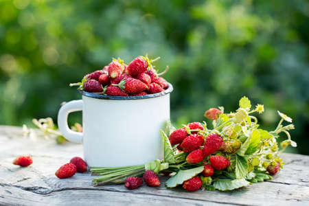 Tasty and fresh strawberries Stockfoto