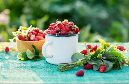 Fragrant wild strawberry Stock Photo