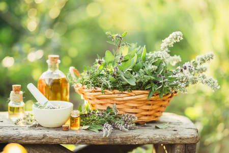 Plantes médicinales dans le panier Banque d'images