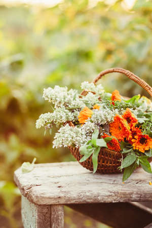 Flowers in a basket in the garden, natural light