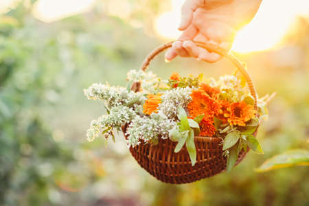 Womans hand holding a basket of flowers from the garden, natural light
