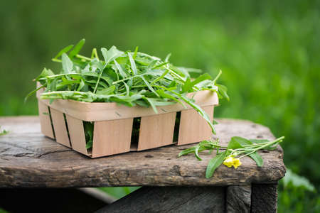 Fresh arugula leaves in a wooden box on a garden table.
