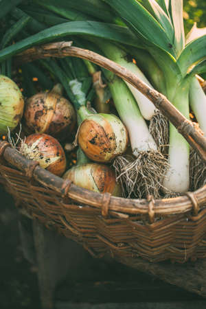 Freshly Picked Onions and leeks. Stock Photo - 107515304