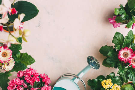 Gardening tools and different flowers, top view. Stock Photo