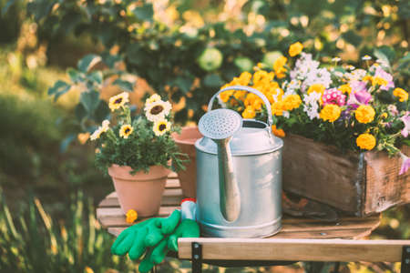 Various potted flowers and a metal watering can on the table in the beautiful garden. Gardening.