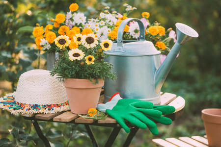 Various potted flowers and a metal watering can on the garden table. Selective focus.