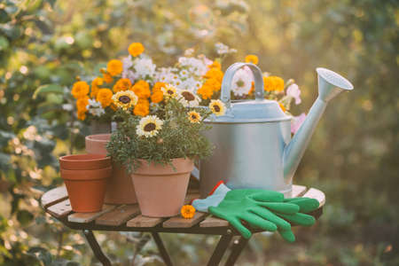 Gardening. Various potted flowers and a metal watering can on the garden table. Reklamní fotografie