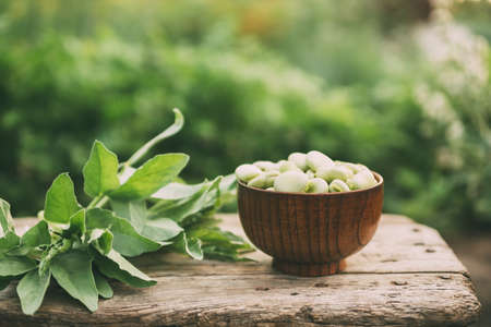 Broad beans or fava beans in a bowl in the garden. Organic diet and vegan food, Selective focus Banco de Imagens