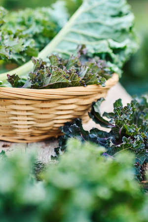 Green leaves of Kale in a basket on a small table Reklamní fotografie - 129271718