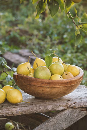 Yellow ripe pears in a bowl on the grass. Reklamní fotografie - 130028349
