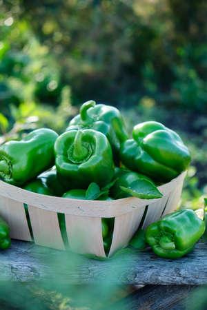 Raw green organic bell pepper Reklamní fotografie