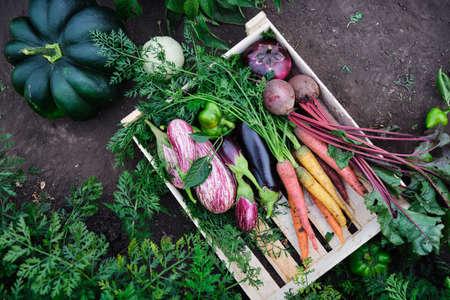 Fresh organic raw vegetables Reklamní fotografie