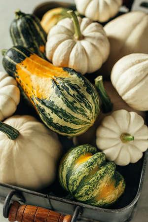 Different pumpkins close-up. Reklamní fotografie