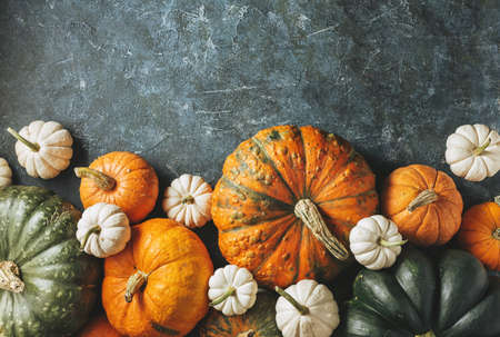 Different pumpkins on a green surface. Harvest pumpkins. Autumn background with copy space.