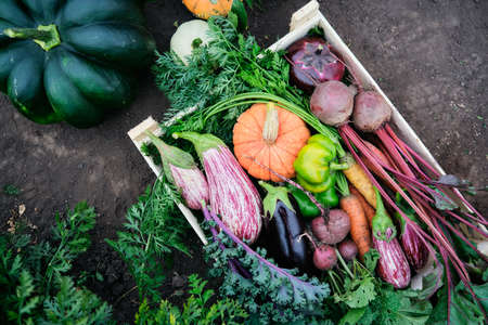 Autumn background with different vegetables in a wooden box in the garden, top view. Organic food. Reklamní fotografie