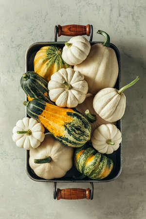 Different decorative pumpkins in the tray. Top view. Reklamní fotografie