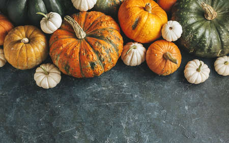 Different pumpkins on a green surface for holiday decorations. Harvest pumpkins. Autumn background with copy space.