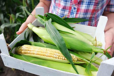 Woman holding fresh corn