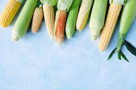 Fresh cobs of various corn Stock fotó