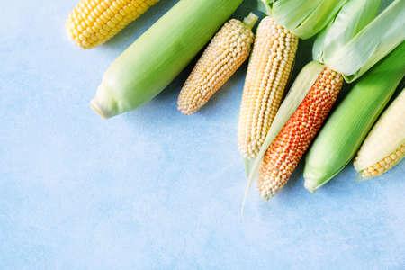 Organic fresh cobs of various corn Stock fotó