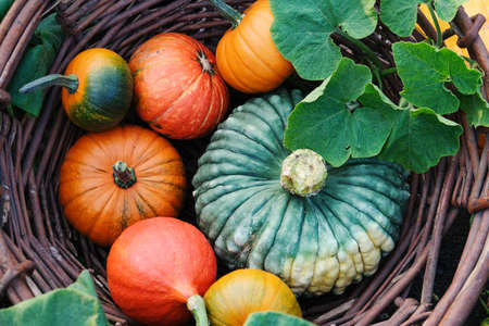 Different pumpkins in a large wicker, outdoors. Stock fotó