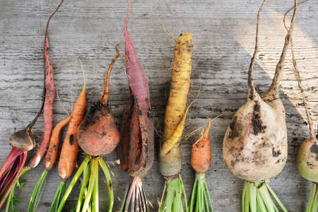 Ugly organic vegetables colorful carrots and beets. Flat lay. Stock fotó - 156155963