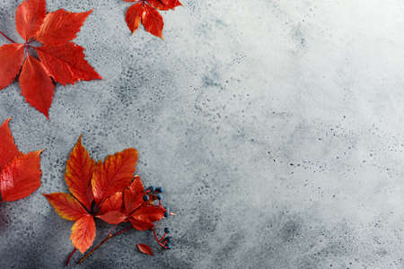 Autumn background with red leaves, copy space. Stock fotó - 156155970
