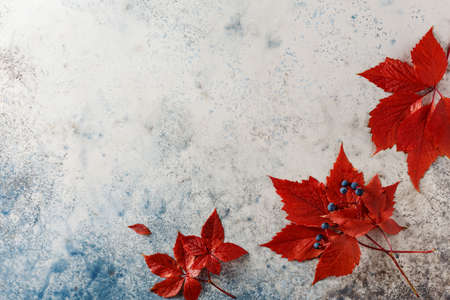 Red autumn leaves on a blue background, top view. Copy space. Stock fotó - 156156014