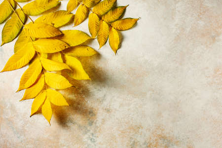 Beautiful yellow leaves on a textured beige background. Autumn concept. Stock fotó - 156418342